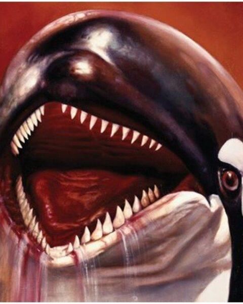 S16: E5: Orca: The Killer Whale